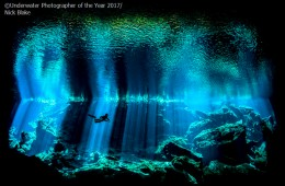 The 2017 Underwater Photographer of the Year Contest