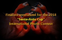 "Finalists announced for the 2018 ""Sente·Antu Cup"" International Photo Contest"