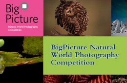 2016 BigPicture Natural World Photography Competition