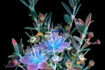 Bright Photographs of Glowing Flowers[19]