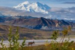 11-day Tour in Alaska[1]